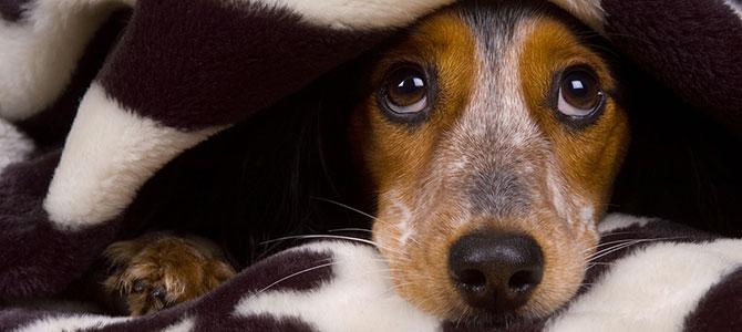 Cani, no ai botti di Capodanno
