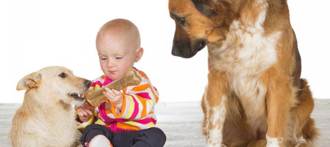 I cani possono provare gelosia?