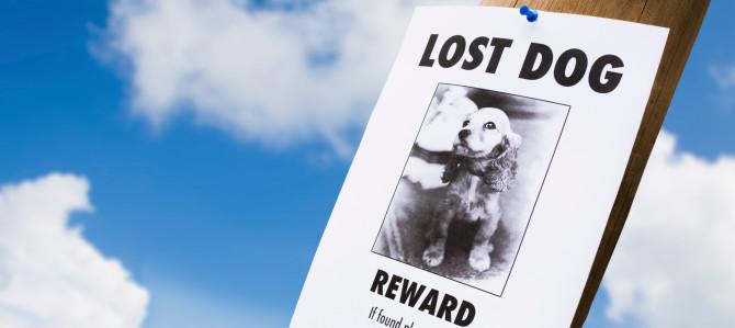 Cielo! Ho smarrito il mio cane!!!