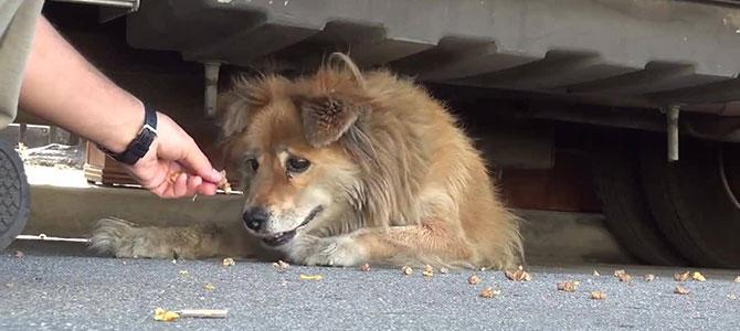 Cani abbandonati: numeri verdi utili