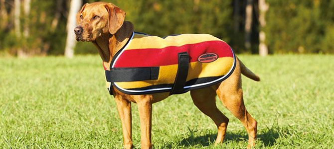 Pro e contro del cappottino per i cani - MondoFido.it 499b7d3d901b