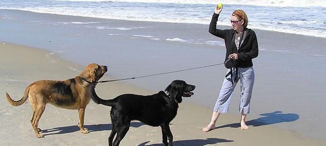 Dog sitter: quando la passione diventa un ottimo lavoro