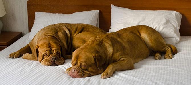 Come scegliere l'hotel giusto per noi e il nostro cane