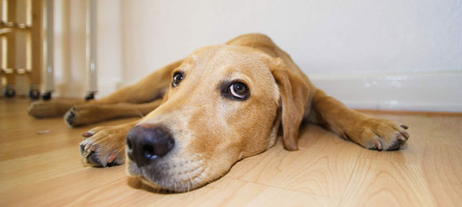 Inappetenza del cane, possibili cause
