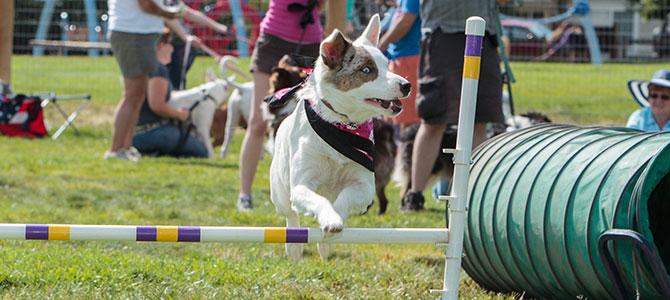 Parco giochi e servizi per cani