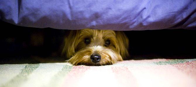 Come aiutare un cane a vincere le proprie paure