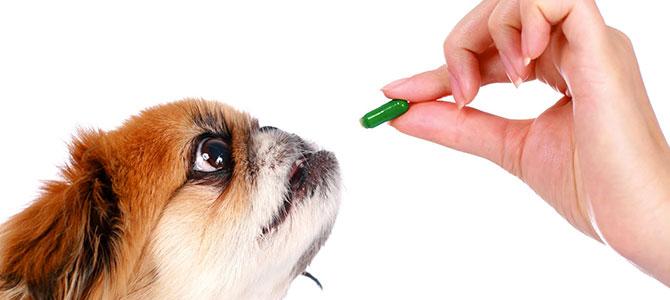 Psicofarmaci per il cane?