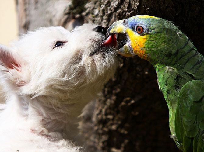 Cani, cibo e… pappagalli