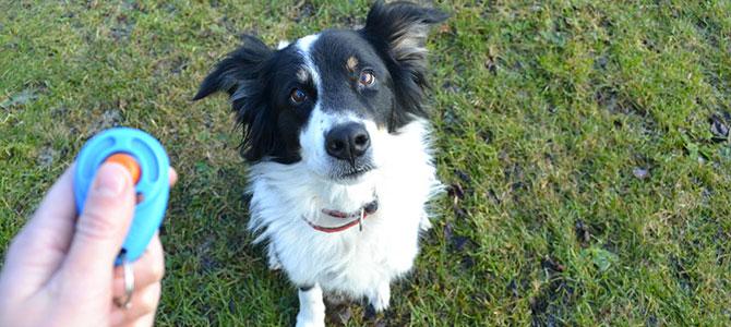 Educare il cane con il Clicker Training funziona?