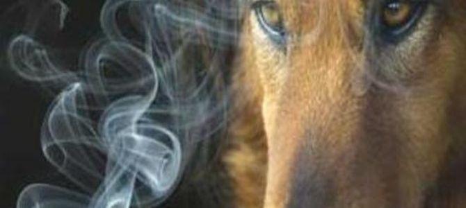 Il fumo passivo danneggia anche i cani