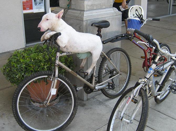 Pronti per il Giro d'Italia?