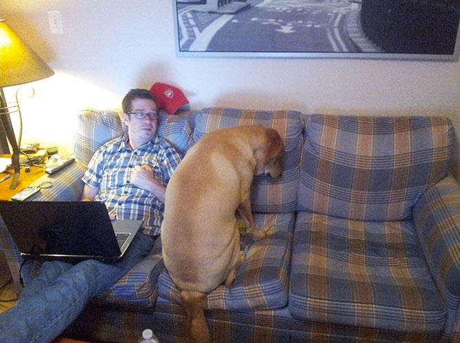 Come schiodare il padrone dal divano