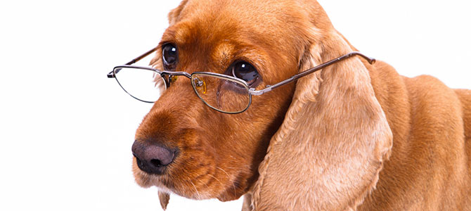 Allarme abbandono per i cani anziani
