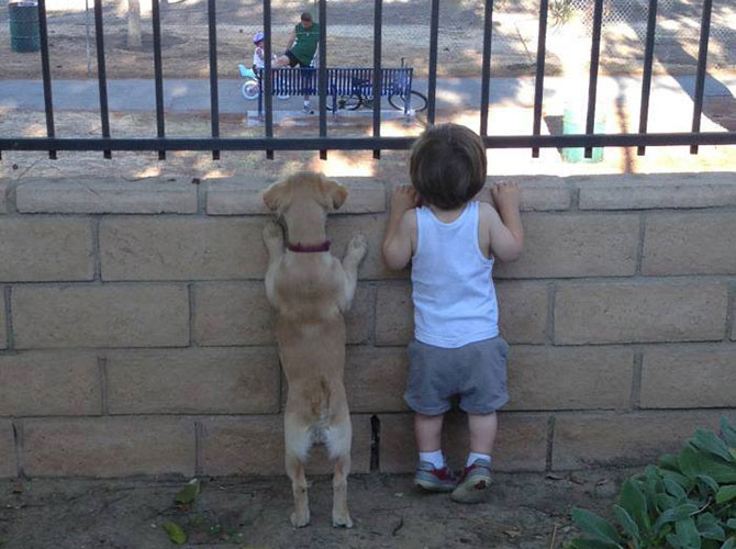 Cuccioli curiosi
