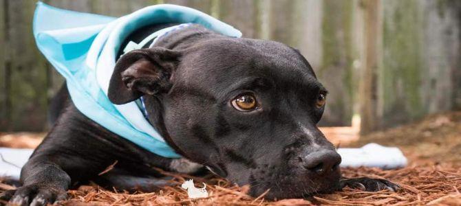 Zosia, cane che dà conforto agli atleti con disabilità