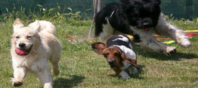 Cani in vacanza al Rem Village