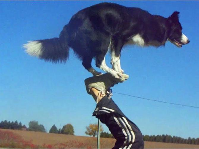 Nana, il cane acrobata