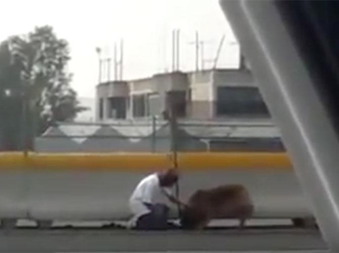 Salva la vita al cane rischiando la propria