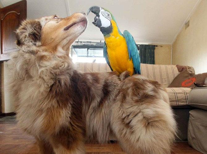 Un amico multicolore