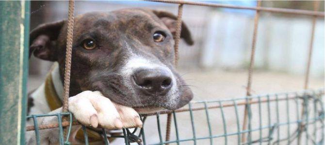 Anche la crisi colpevole degli abbandoni dei cani