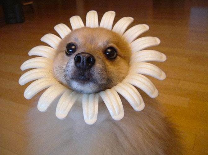 Per fare un cane, ci vuole un fiore…