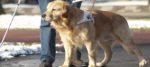 Hotel rifiuta prenotazione a signora ipovedente e il suo cane