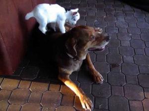 Cani e capre? Grandi amici