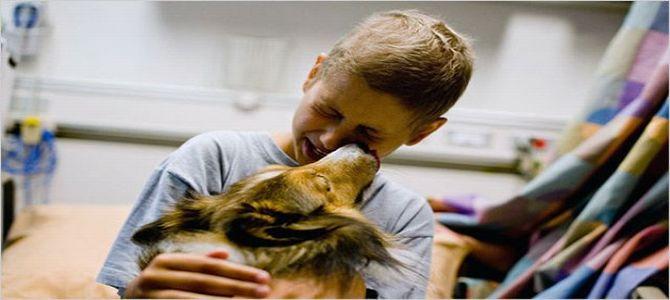 Cani eroi anche nelle corsie degli ospedali
