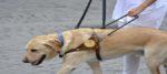 Il 16 ottobre Giornata nazionale del cane guida