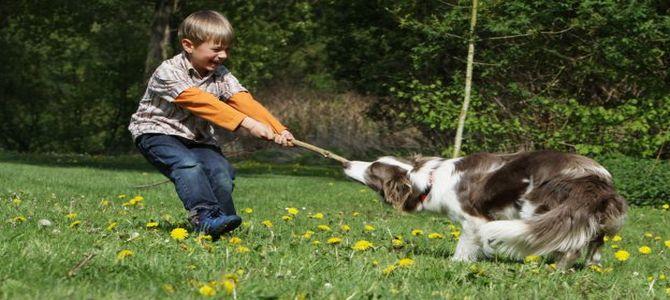 Incontro dei bambini con gli esperti zoofili
