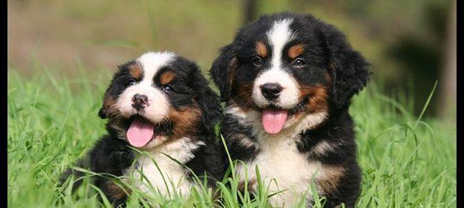 I cani più belli? Su Facebook sono una truffa
