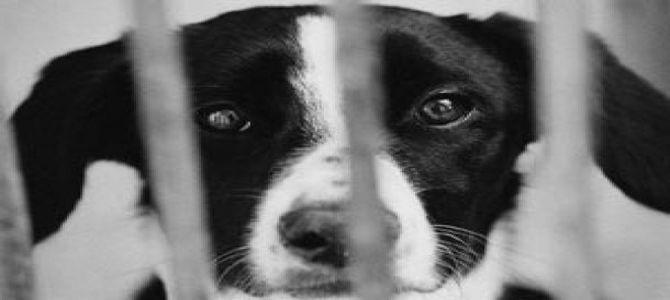 La Corea del Sud dice stop alla carne di cane