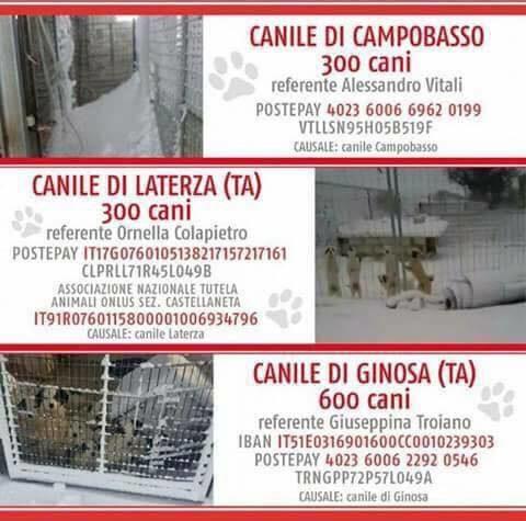 Emergenza freddo nei canili del sud Italia