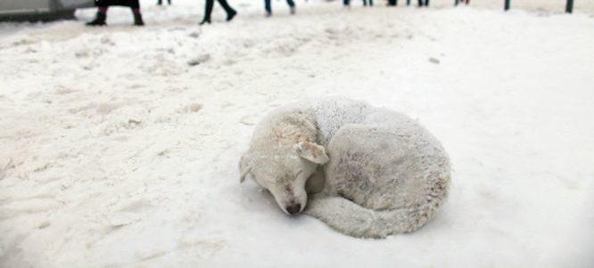 Rischio assideramento per oltre 40.000 cani