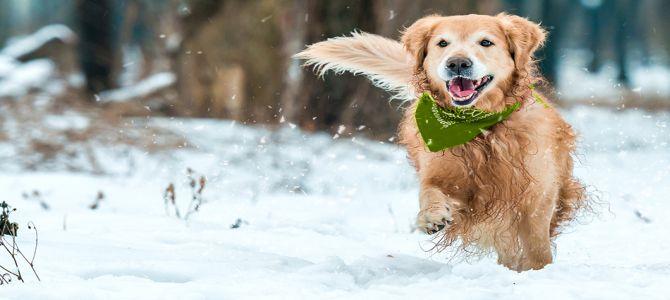 Fa freddo? Attenti al cane!