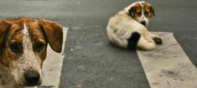 Aidaa, un aiuto concreto ai clochard ed ai loro cani