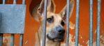Tutti adottati i cani trovati e sequestrati da un garage a Belluno