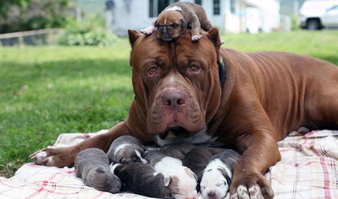 Il distacco del cucciolo dalla madre