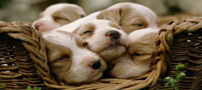 Terracina in prima linea per salvare i cuccioli di cane abbandonati