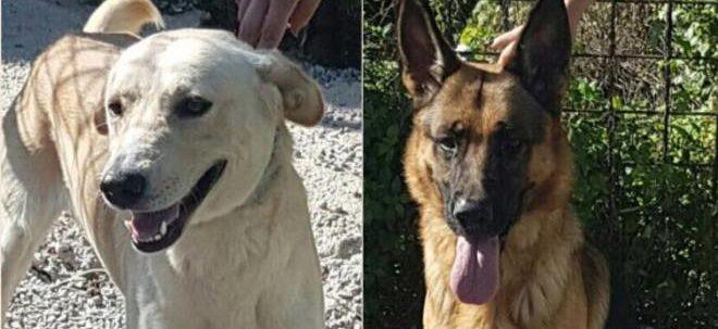Lapo e Rex, due cani e una casa per vivere insieme