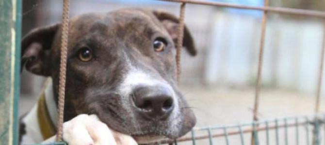 La Lega del cane blocca il trasferimento dei cani dal canile di Palermo