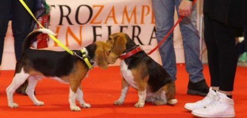Milano, nuova tappa per l'atteso evento QuattroZampeInFiera.