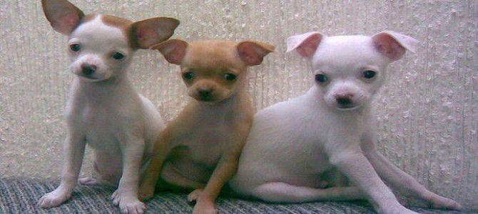 I cuccioli sequestrati in Veneto pronti per essere adottati