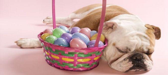Uova di Pasqua per aiutare i cani randagi de L'Aquila