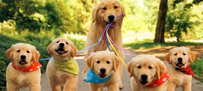 Partito in Sardegna un piano di sterilizzazione per i cani di proprietà