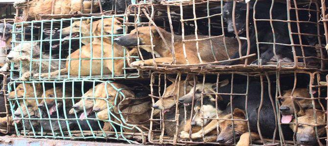 Taiwan dice addio al consumo alimentare di carne di cane
