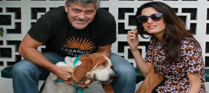 Geroge Clooney dona 10mila dollari a un canile californiano