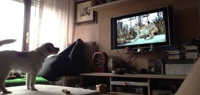 DogTv , la tv da cani, un canale dedicato al cane solo che aspetta il nostro rientro.