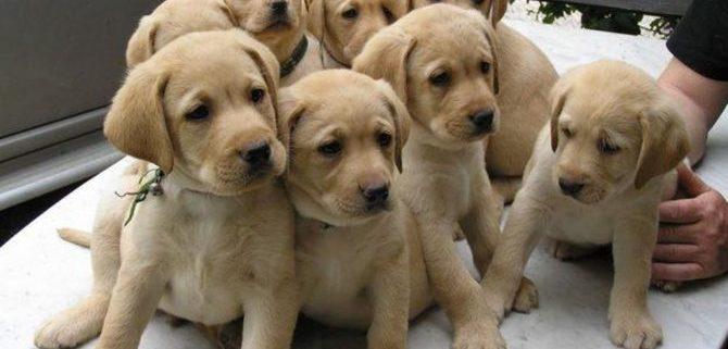 Cuccioli acquistati on line: una pratica da evitare.