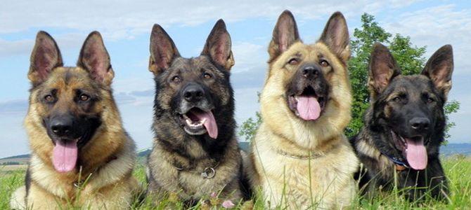 A Peveragno Corso Dedicato Ai Cani Da Guardia Mondofidoit